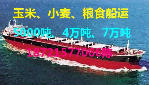 出租5000吨、4万吨玉米、小麦、粮食散货船运输